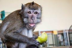 Affe isst eine BIRNE Stockbild