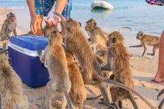 Affe isst Eis Lizenzfreie Stockbilder