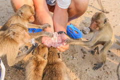 Affe isst Eis Stockbilder