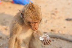 Affe isst Eis Lizenzfreies Stockbild