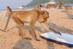 Affe isst Eis Lizenzfreies Stockfoto