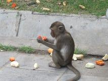 Affe isst Früchte in Lopburi Thailand Stockbilder