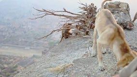 Affe isst Lebensmittel auf Abgrund-Hundesuchvorgang-Resten stock video