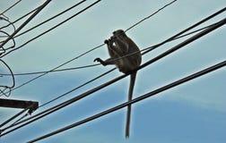 Affe ist auf der Stromleitung Stockfotos