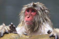 Affe ist Entspannung Stockfotografie