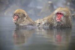 Affe ist Entspannung Lizenzfreies Stockfoto