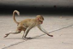 Affe ist im Park bei Thailand Lizenzfreie Stockfotos