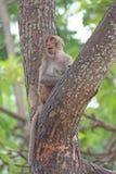 Affe ist im Park bei Thailand Stockfotografie