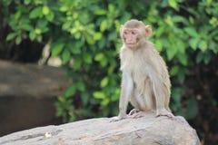 Affe ist im Park bei Thailand Stockfotos