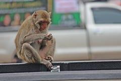 Affe ist im Park bei Thailand Stockbild