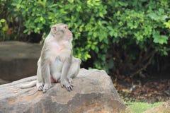 Affe ist im Park bei Thailand Lizenzfreies Stockbild