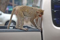 Affe ist im Park bei Thailand Lizenzfreie Stockbilder