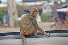 Affe ist im Park bei Thailand Lizenzfreie Stockfotografie