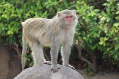 Affe ist im Park bei Thailand Stockfoto