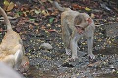 Affe ist im Park bei Thailand Lizenzfreies Stockfoto