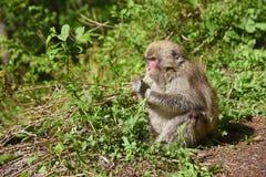 Affe in Japan Lizenzfreie Stockbilder