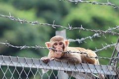 Affe in Kam Shan Country Park, HK Lizenzfreies Stockbild