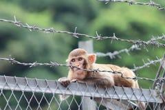 Affe in Kam Shan Country Park, HK Lizenzfreie Stockbilder
