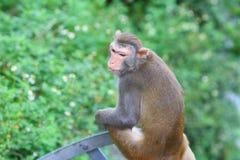Affe in Kam Shan Country Park, Kowloon Lizenzfreies Stockbild