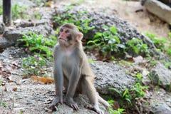 Affe in Kam Shan Country Park, Kowloon Lizenzfreie Stockfotos