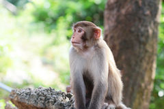 Affe in Kam Shan Country Park, Kowloon Lizenzfreies Stockbild
