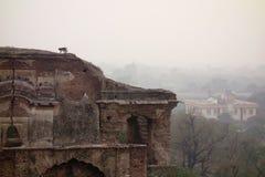 Affe klettert alten Tempel Stockbilder