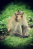 Affe - Konzept der Freiheit Lizenzfreies Stockfoto