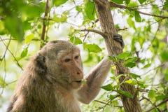 Affe leben in der Natur Lizenzfreies Stockfoto