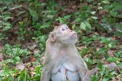 Affe leben in der Natur Stockfoto