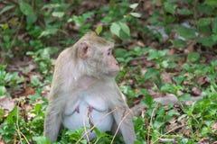 Affe leben in der Natur Stockfotos