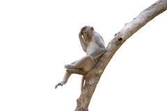 Affe leben in der Natur Stockbild