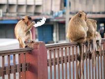 Affe in Lop- Buriprovinz Lizenzfreies Stockbild