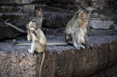 Affe in Lopburi Stockfotos