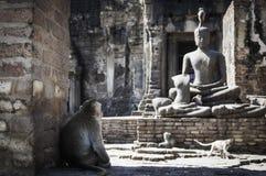 Affe in Lopburi Stockfoto