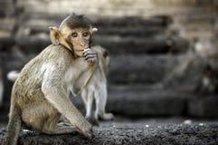 Affe in Lopburi Stockfotografie