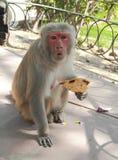 Affe mögen nicht, dass jemand auf dem Weg es ist Stockbild