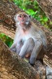 Affe, Makaken auf einem Baum Lizenzfreie Stockfotografie