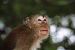 Affe-Makaken, Railay, Krabi, Thailand Lizenzfreie Stockfotografie