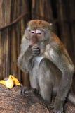 Affe-Makaken, Railay, Krabi, Thailand Lizenzfreies Stockbild