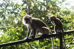 Affe-Mama u. Baby, die auf Zaun denken Lizenzfreie Stockbilder