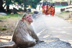 Affe in Mamallapuram Lizenzfreie Stockfotos