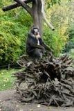 Affe-Mandrill sitzt auf einem Baum Lizenzfreie Stockfotografie