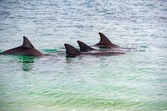 Affe mia Delphine nahe dem Ufer Stockfoto