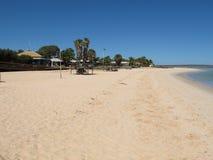 Affe Mia, Haifisch-Bucht, West-Australien Lizenzfreies Stockbild