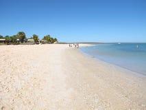 Affe Mia, Haifisch-Bucht, West-Australien Lizenzfreie Stockfotografie