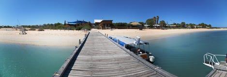 Affe Mia, Haifisch-Bucht, West-Australien Lizenzfreie Stockbilder