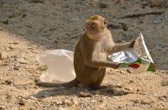 Affe mit Abfall Stockfoto