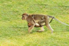 Affe mit Baby Lizenzfreie Stockfotos