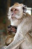 Affe mit Baby Stockbild