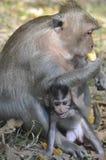Affe mit Baby Stockfoto